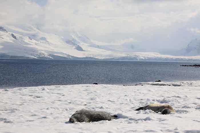Antarctique un monde à part pour un voyage