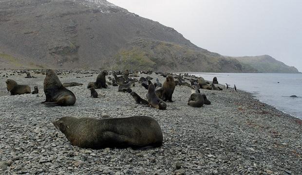 phoques en antarctique