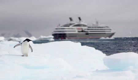 pingouin en Antarctique